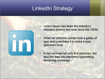 0000072617 PowerPoint Template - Slide 12