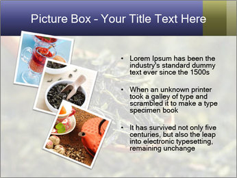 0000072617 PowerPoint Template - Slide 17
