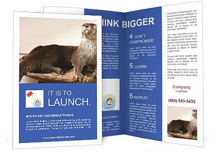 0000072634 Brochure Templates