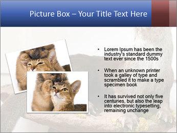 0000072634 PowerPoint Template - Slide 20