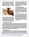 0000072634 Word Templates - Page 4