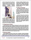 0000072661 Word Template - Page 4