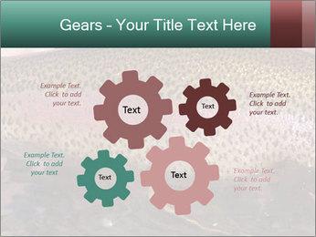 0000072684 PowerPoint Templates - Slide 47