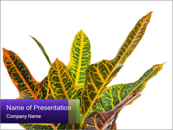 0000072691 PowerPoint Template - Slide 1