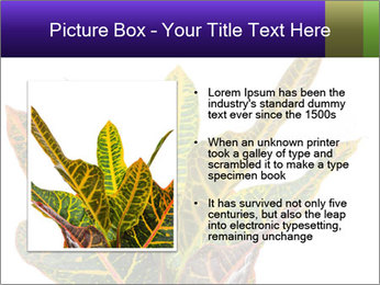 0000072691 PowerPoint Template - Slide 13