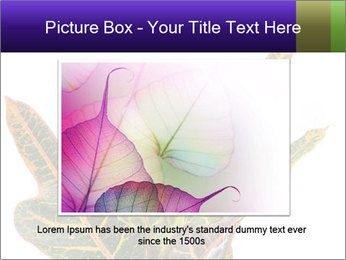 0000072691 PowerPoint Template - Slide 15