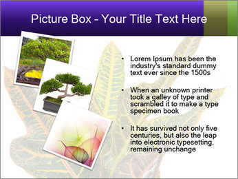 0000072691 PowerPoint Template - Slide 17