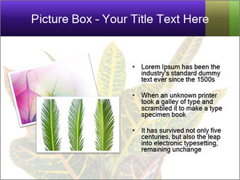 0000072691 PowerPoint Template - Slide 20
