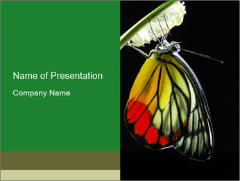 0000072697 PowerPoint Template - Slide 1