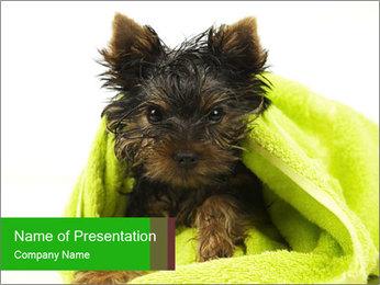 0000072722 PowerPoint Template - Slide 1