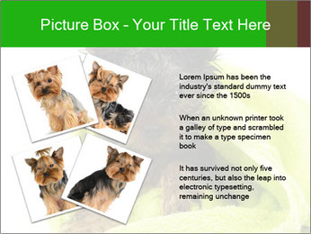 0000072722 PowerPoint Template - Slide 23
