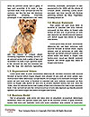 0000072722 Word Templates - Page 4