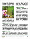 0000072730 Word Templates - Page 4
