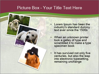 0000072731 PowerPoint Template - Slide 17