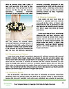 0000072763 Word Template - Page 4