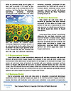 0000072770 Word Template - Page 4