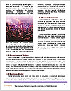 0000072791 Word Templates - Page 4