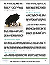 0000072796 Word Templates - Page 4