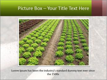 0000072866 PowerPoint Template - Slide 15