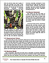0000072866 Word Template - Page 4