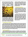0000072879 Word Template - Page 4