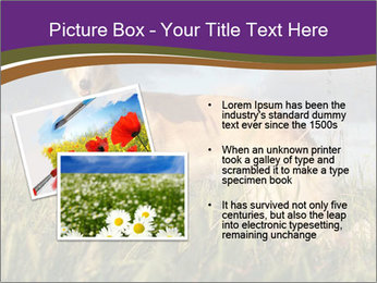 0000073017 PowerPoint Template - Slide 20