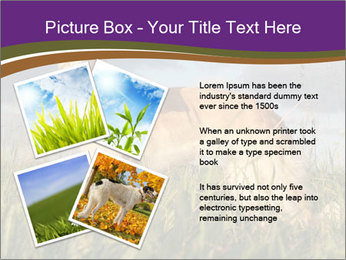 0000073017 PowerPoint Template - Slide 23