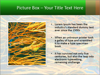 0000073071 PowerPoint Template - Slide 13