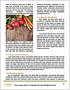 0000073072 Word Template - Page 4