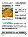 0000073113 Word Template - Page 4