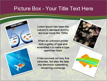 0000073183 PowerPoint Template - Slide 24