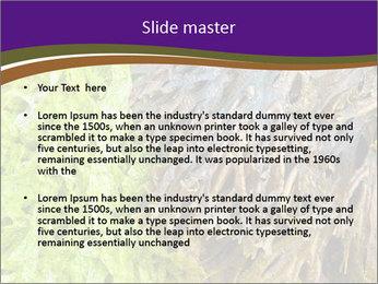 0000073192 PowerPoint Template - Slide 2