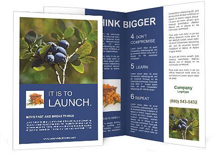 0000073224 Brochure Templates