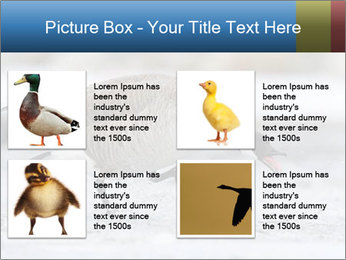 0000073347 PowerPoint Template - Slide 14