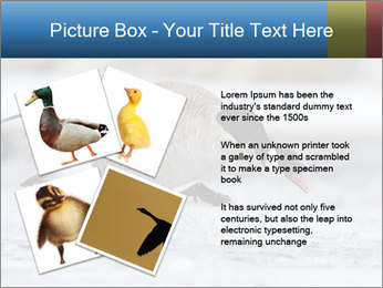 0000073347 PowerPoint Template - Slide 23