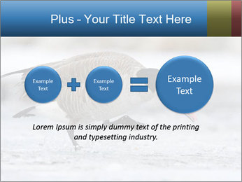 0000073347 PowerPoint Template - Slide 75