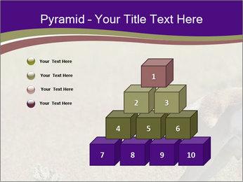 0000073387 PowerPoint Templates - Slide 31