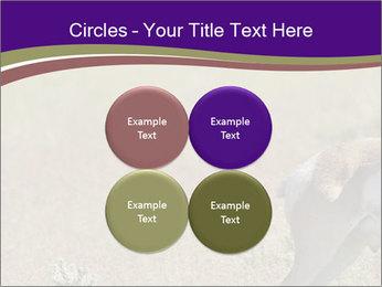 0000073387 PowerPoint Templates - Slide 38