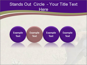 0000073387 PowerPoint Template - Slide 76