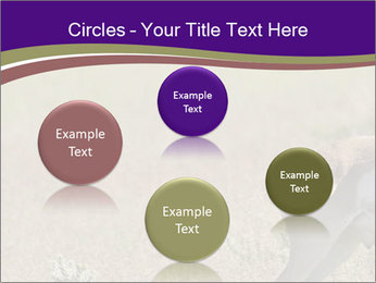 0000073387 PowerPoint Templates - Slide 77