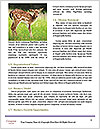 0000073387 Word Template - Page 4