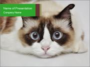 0000073428 PowerPoint Templates