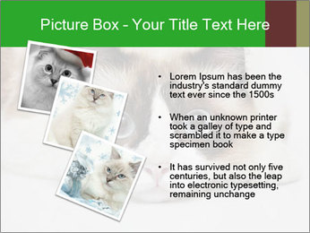 0000073428 PowerPoint Template - Slide 17