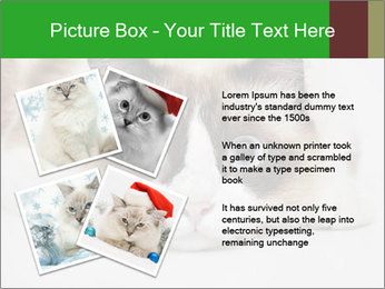 0000073428 PowerPoint Template - Slide 23