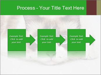 0000073428 PowerPoint Template - Slide 88