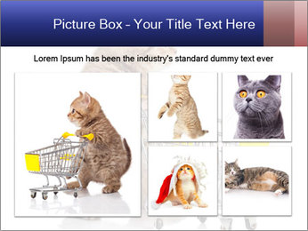 0000073436 PowerPoint Templates - Slide 19