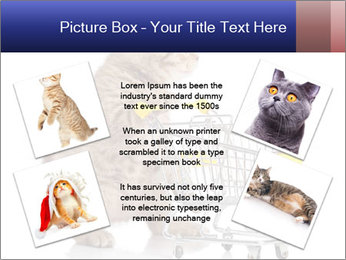 0000073436 PowerPoint Templates - Slide 24