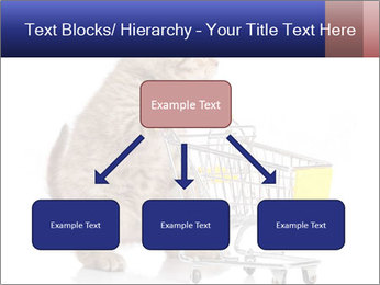 0000073436 PowerPoint Templates - Slide 69