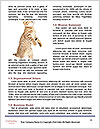 0000073436 Word Template - Page 4