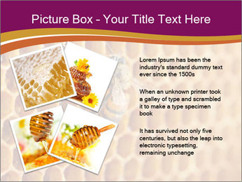 0000073446 PowerPoint Template - Slide 23